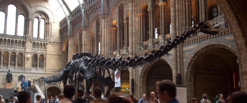 Gamtos Istorijos muziejus Londone